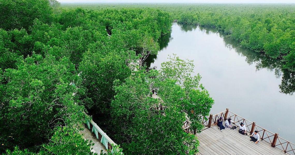 Puluhan Spesies Mangrove di Kawasan Hutan Bakau Langsa Aceh