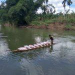 Tak Ada Jembatan Penghubung, Proses Distribusi Hasil Pertanian Petani Serbajadi Memprihatinkan