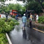 Polsek Pemenang Bergerak Cepat Evakuasi Pohon Tumbang Di Teluk Ombal