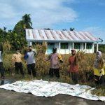 Panen Padi Perdana SMPN 6 dan Polsek Birem Bayeun Aceh Timur