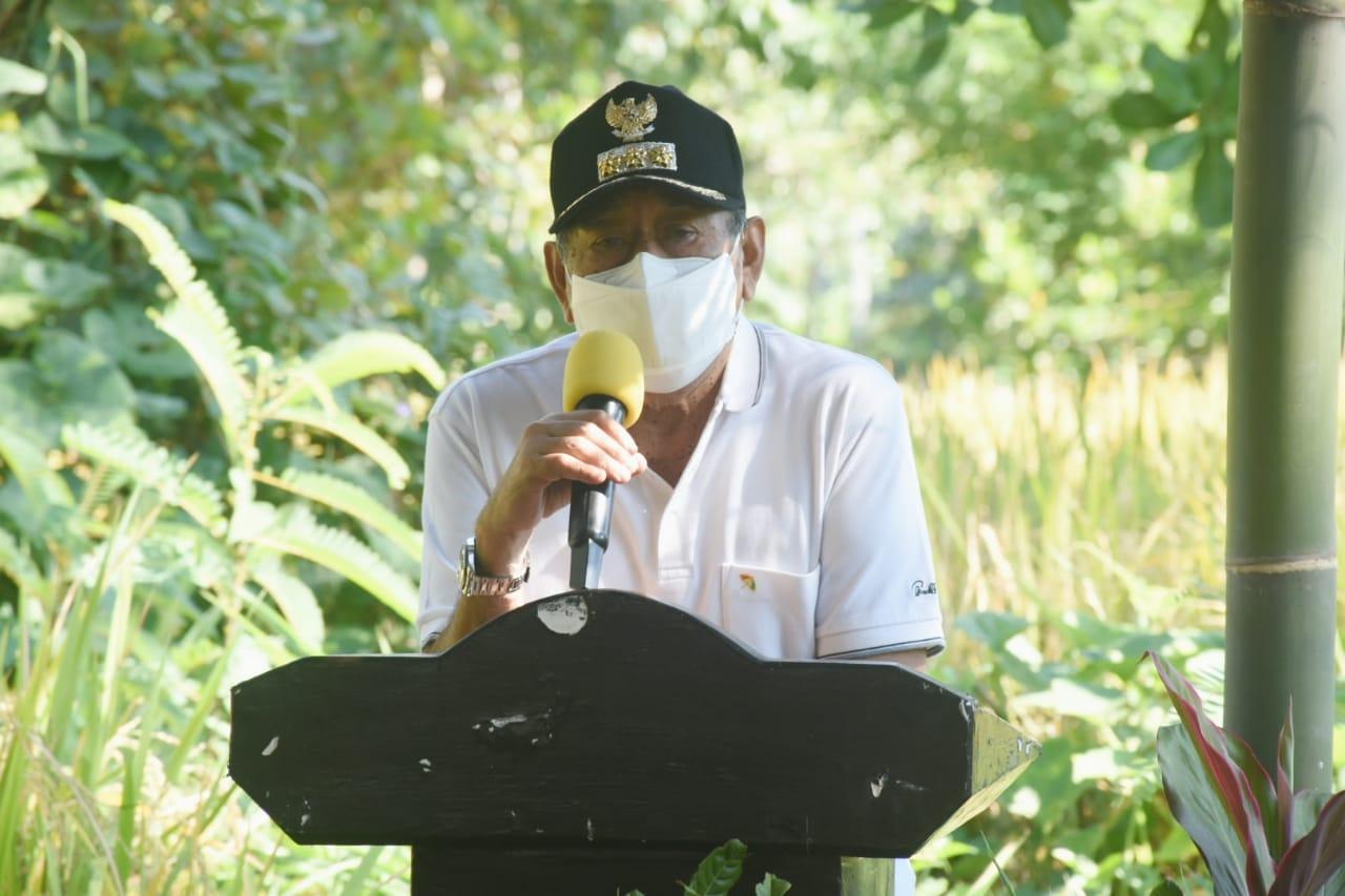 Bupati Lombok Utara Panen Perdana Padi Varietas Sertani